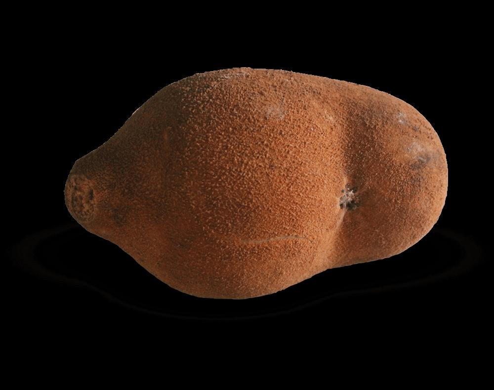 Copoazú